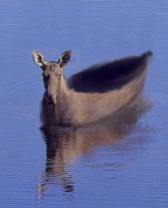 moose-skin boat